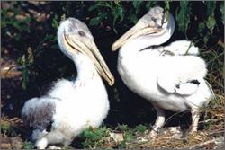 St Andrew Bay Biodiversity