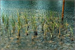 habitats St Andrew Bay ecosystem
